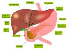 Pengobatan Alami Penyakit Liver