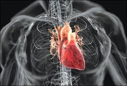 Obat Herbal Jantung Lemah