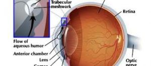 Pengobatan Tradisional Penyakit Glaukoma